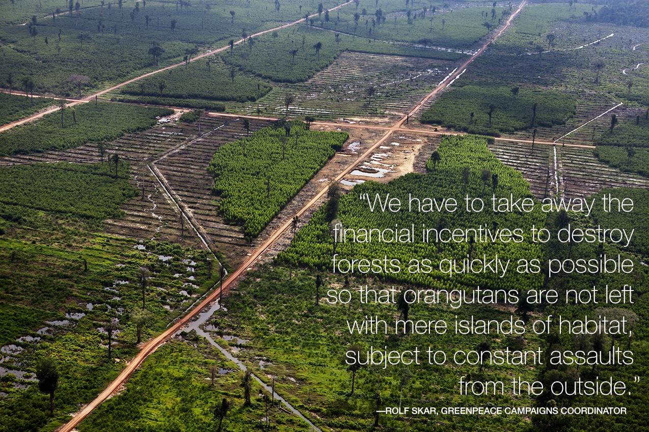 © Kemal Jufri/Greenpeace