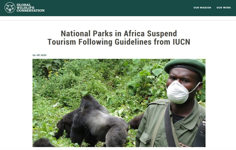 A screenshot of a Global Wildlife Conservation article with headline, 'National Parks in Africa Suspend Tourism Following Guidelines from IUCN,' and image of masked wildlife ranger with group of mountain gorillas in background.