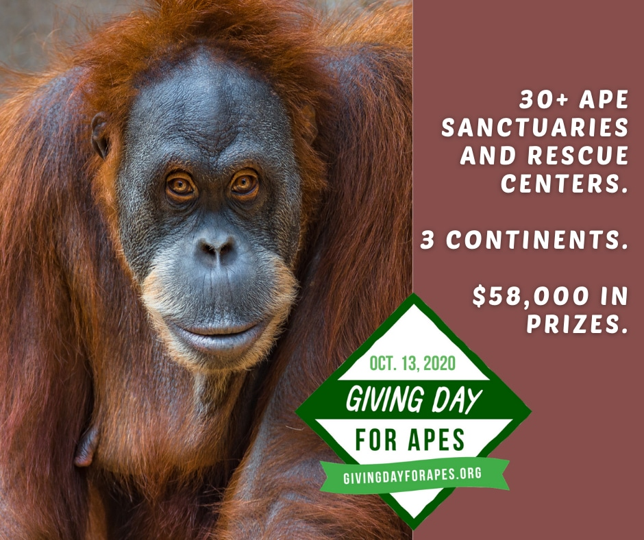 An orangutan and the words '30+ ape sanctuaries and rescue centers. 3 continents. $58,000 in prizes.'